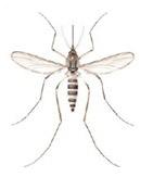 bli kvitt jordveps